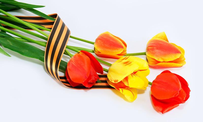 тюльпаны на день победы открытки фото довольно много сборников